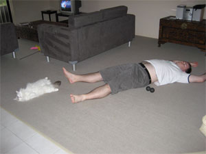 White ragdoll cat sleeping on its back spread eagle
